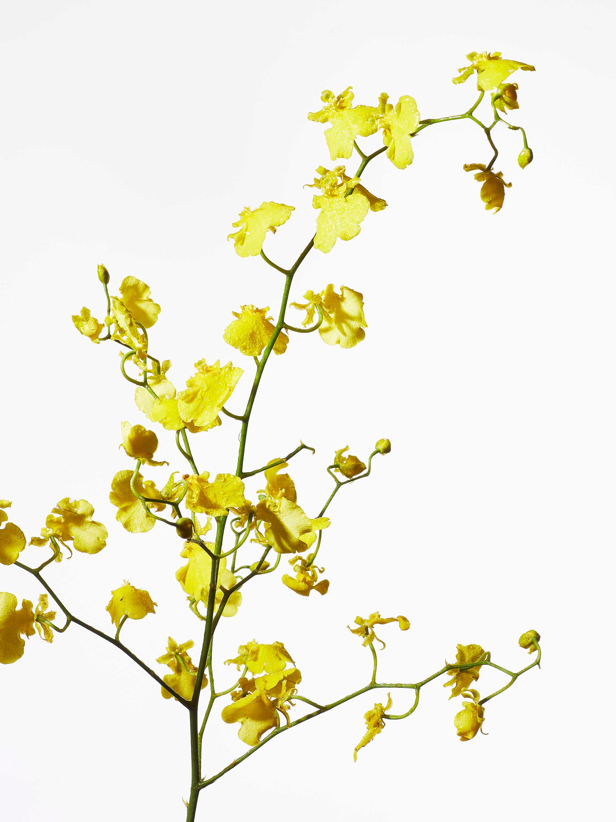 花を撮影した写真
